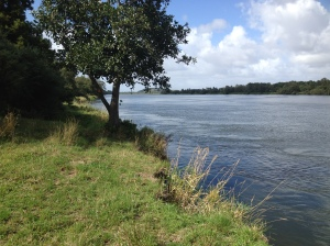 Along the banks of the Waikato River.
