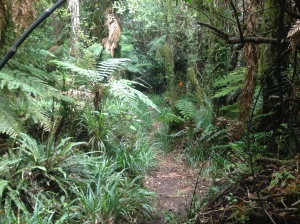 Track up Mt Pirongia.