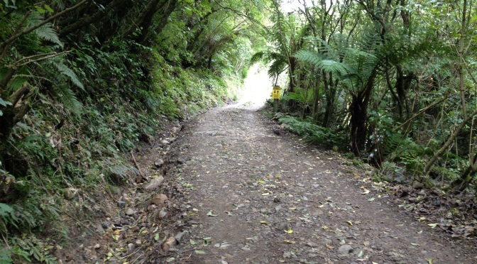 Day 2; Kahuterawa Reserve – Tararua Forest Park Boundary